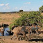 Pamięć ciała. Historia o słoniach z Kenii.