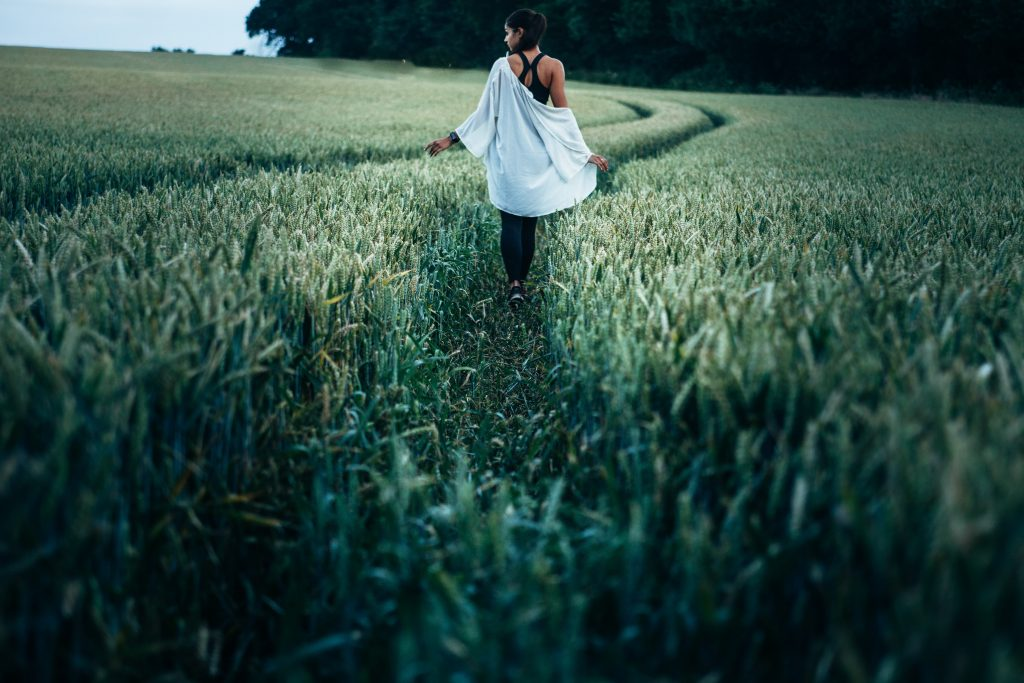 ścieżki w polu